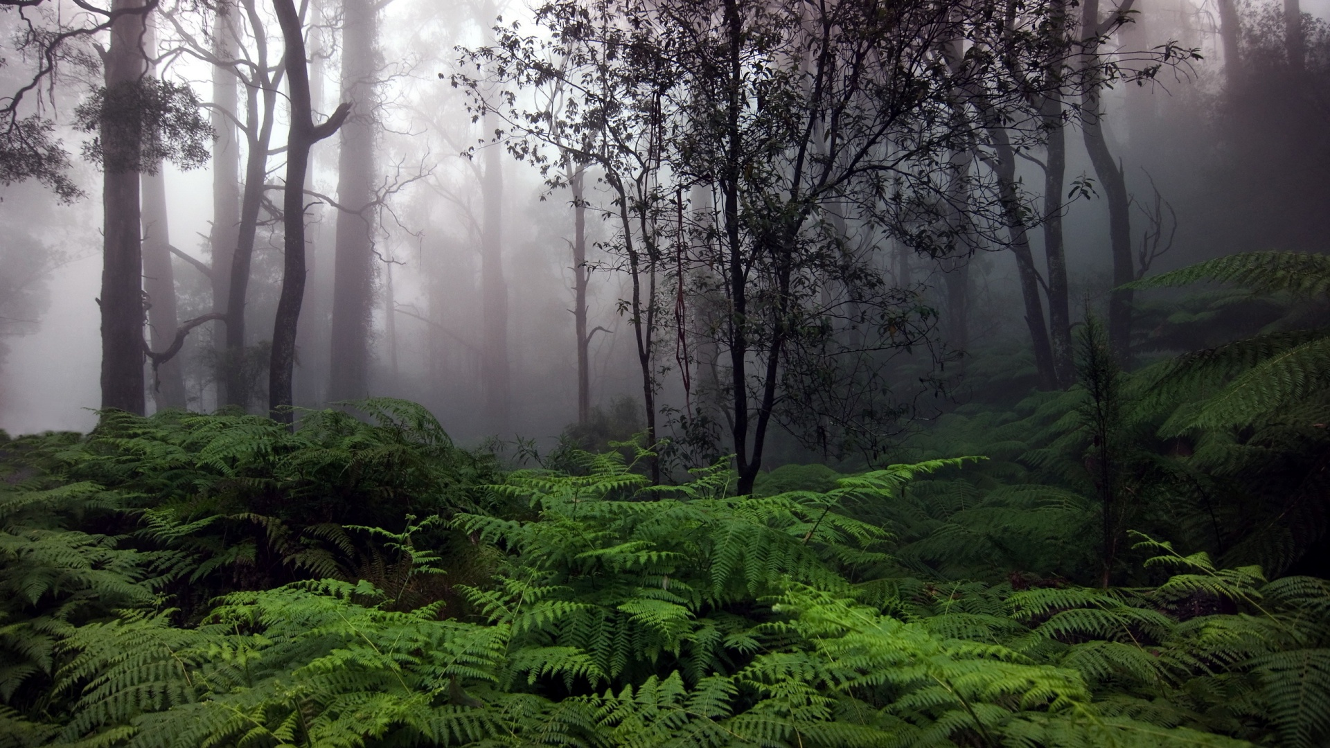 Forest Wallpaper 1920x1080 HD Wallpaper Background Images 1920x1080