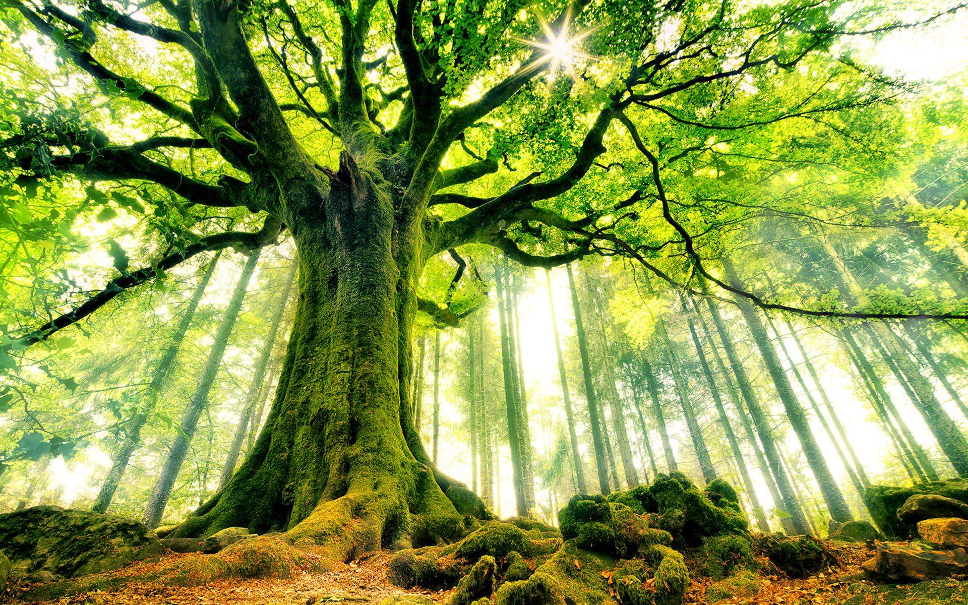 Beautiful Strange Tree HD Wallpapers 1920x1200