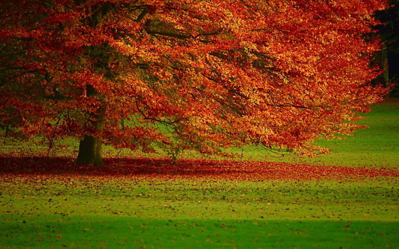 select set as desktop background desktop wallpapers nature forest 1280x800