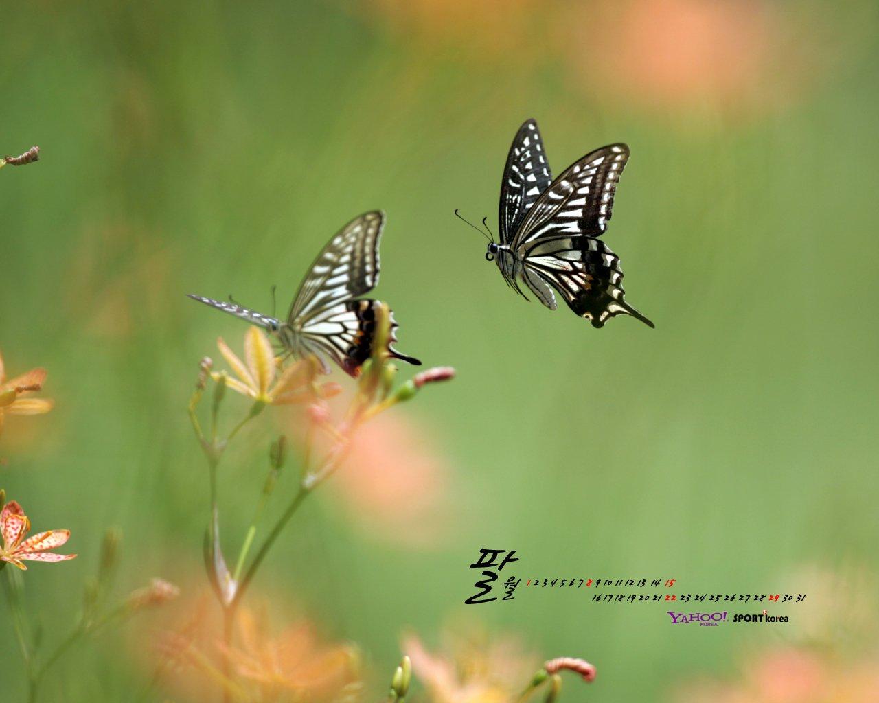 YAHOO South Korea in August Calendar 12088   World Wallpapers 1280x1024