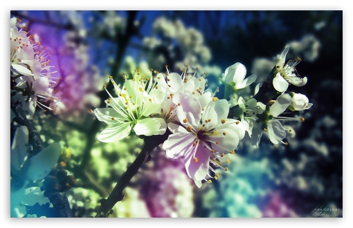 Colorful Spring HD desktop wallpaper Widescreen High Definition 510x330