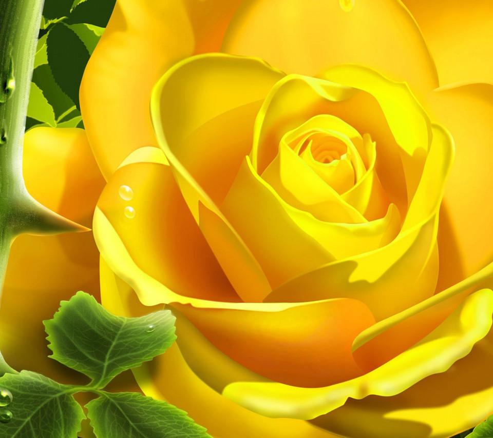 flowers for flower lovers Flowers wallpapers desktop backgrounds 960x854