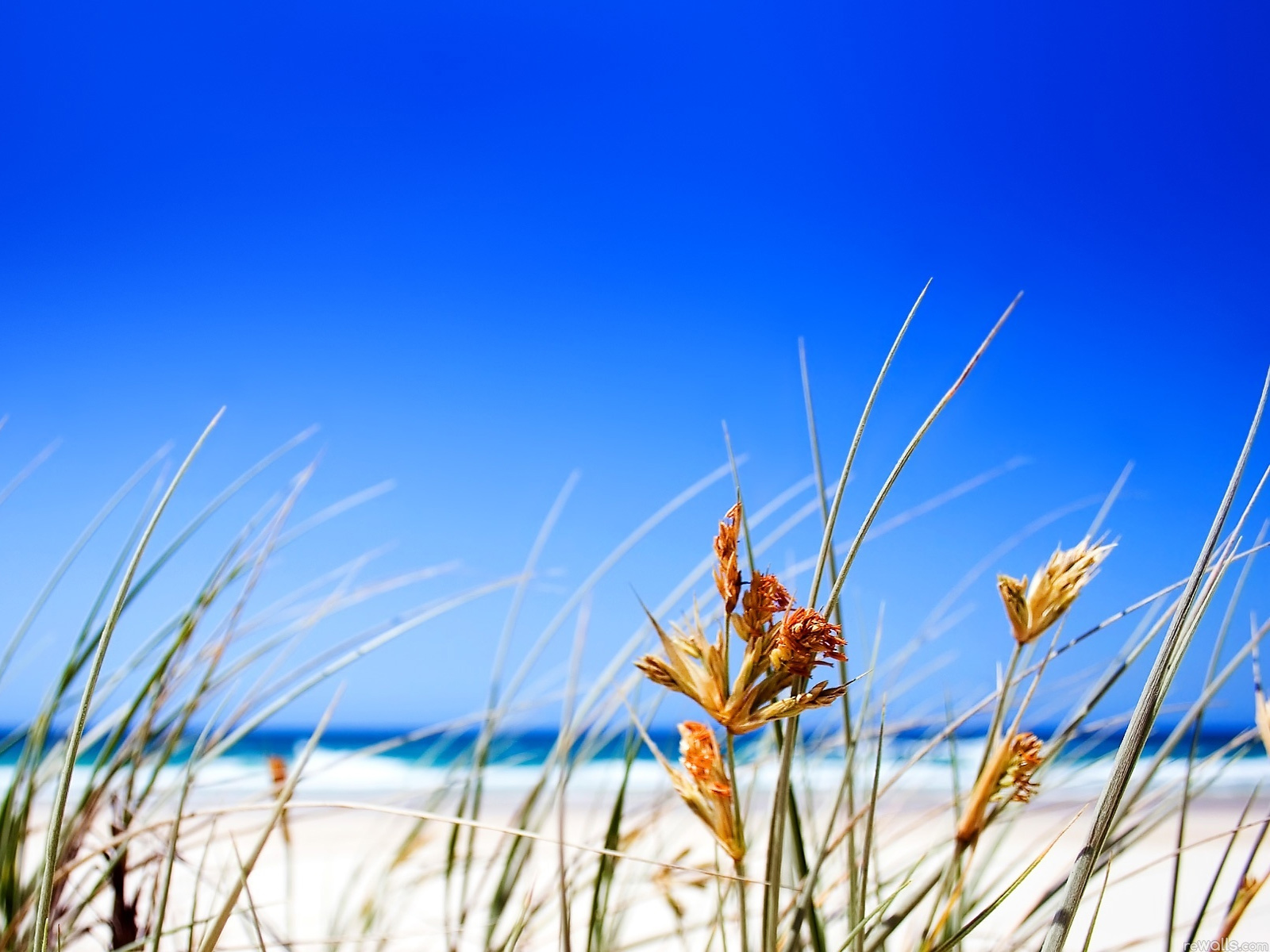 Summer Beach Grass computer desktop wallpapers pictures images 1600x1200