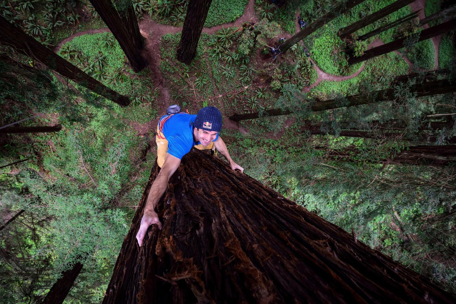 Chris Sharma Climbs Redwood Tree for Giant Ascent 1500x1000