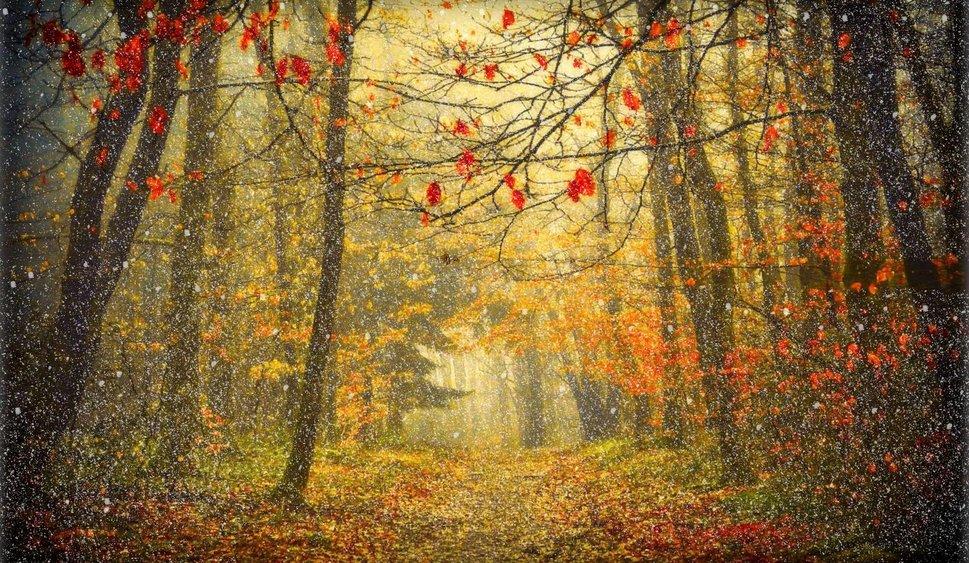 Snowy Fall Day wallpaper   ForWallpapercom 969x563