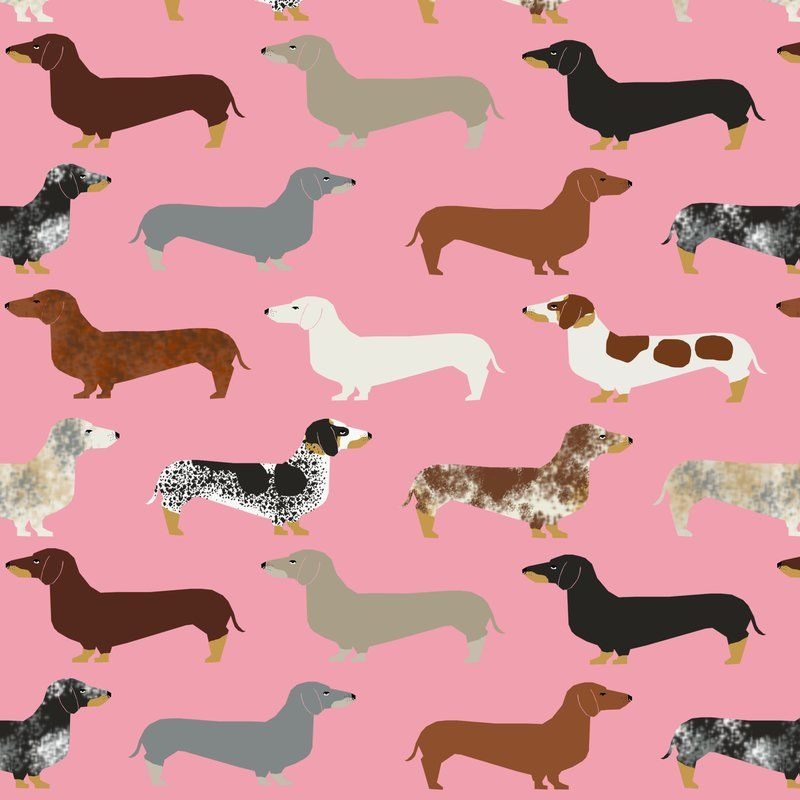 Desktop Weiner Dog Wallpapers 79 images in Collection Page 1 800x800