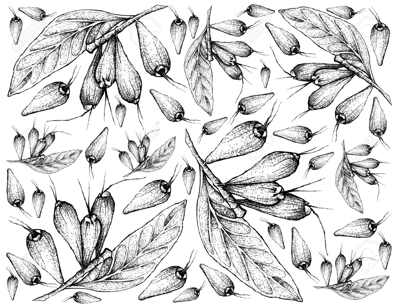 Tropical Fruits Illustration Wallpaper Of Hand Drawn Sketch 1300x1011