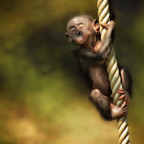 iPad Little Monkey On The Rope Screensaver For Kindle3 And DX 500x500