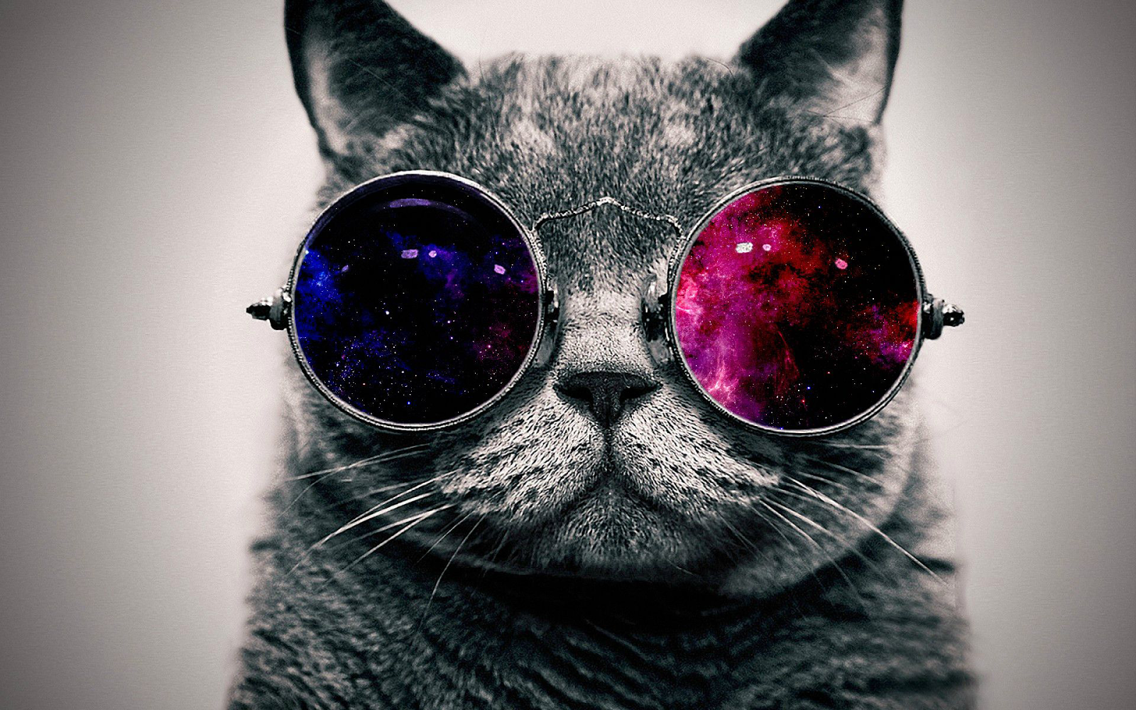 funny cat with glasses picture cats wallpapers cat wallpaper 1600x1000