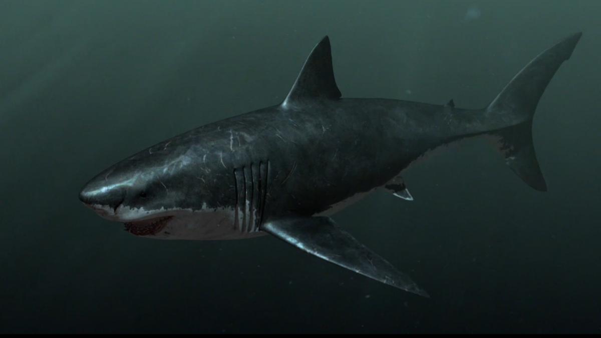 Megalodon Sharkzilla Wallpapers HD Sharks Sharkzilla Hd Megalodon 1200x675