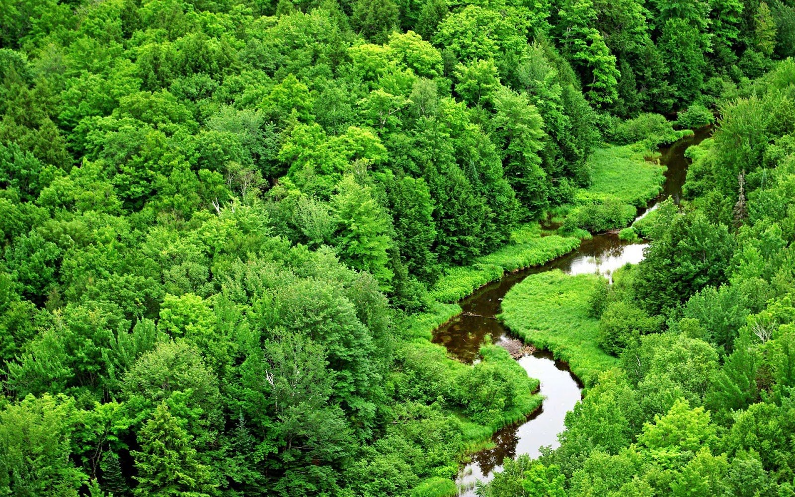 Nature Green Forest Long River Wallpaper Wallpaper ME 1600x1000