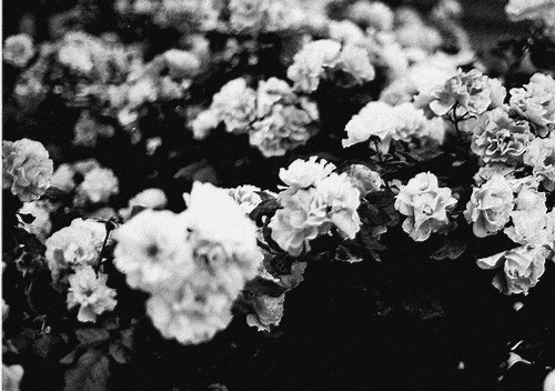 Black and white wallpapers tumblr wallpapersafari black and white tumblr backgrounds camera information 500x352 mightylinksfo