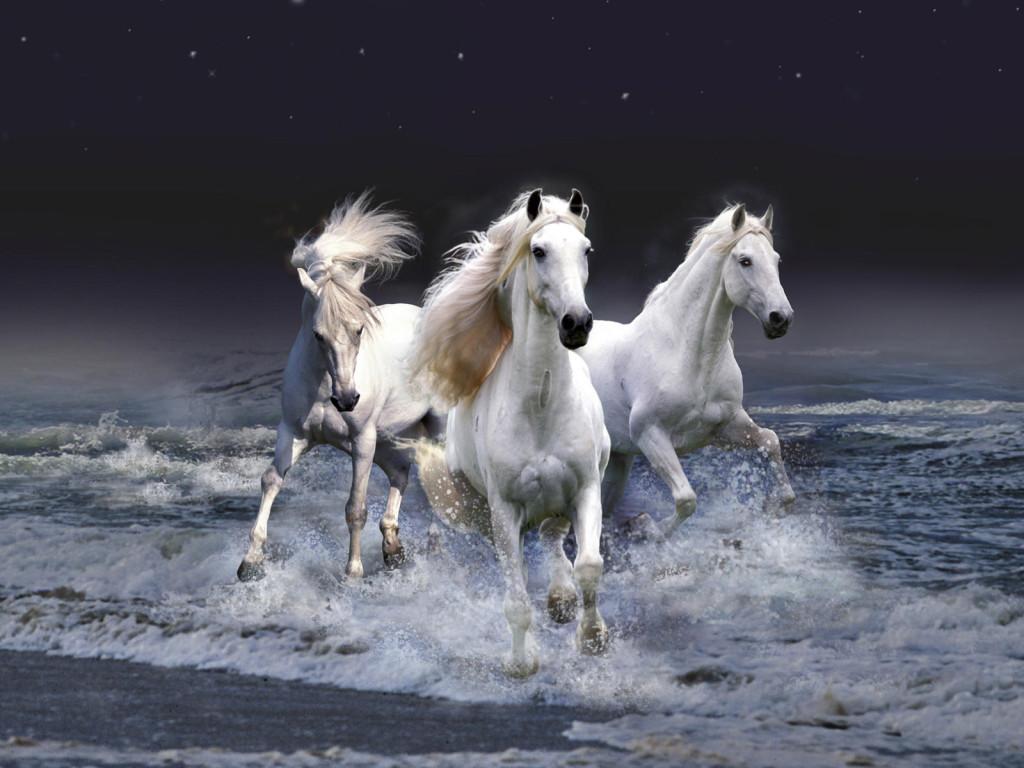 White Horse Wallpapers White Horse Wallpaper for Desktop 1024x768