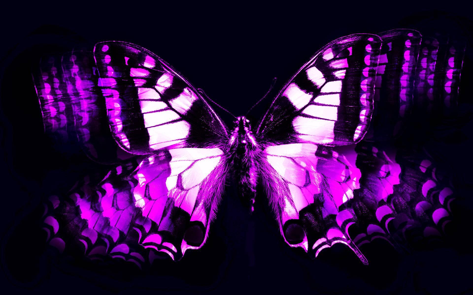 Purple Butterfly Wallpapers 1920x1200