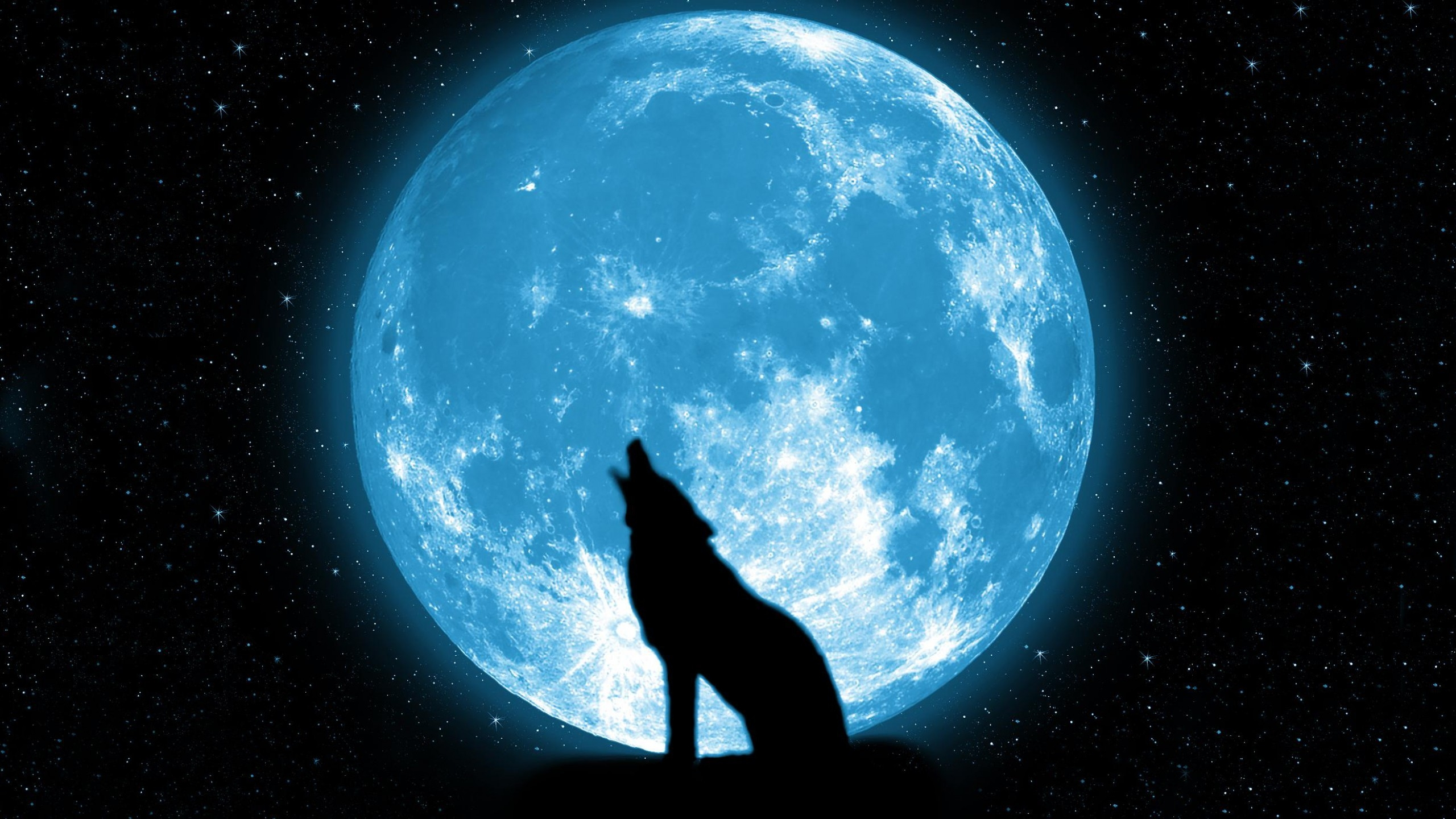 wolf howling on the moon Wallpapers HD 2560x1440