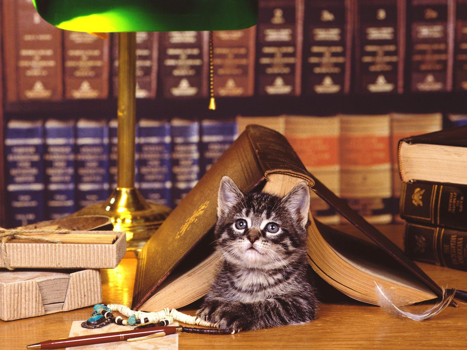 Books   Cats Photography Desktop Wallpapers 5536 Views 1600x1200