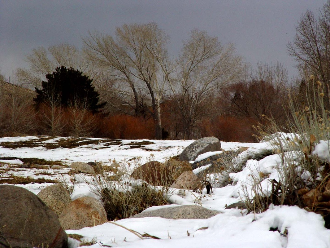 Winter Wallpaper Early Snow Fall Colors   Wallpaper by Design 1066x800