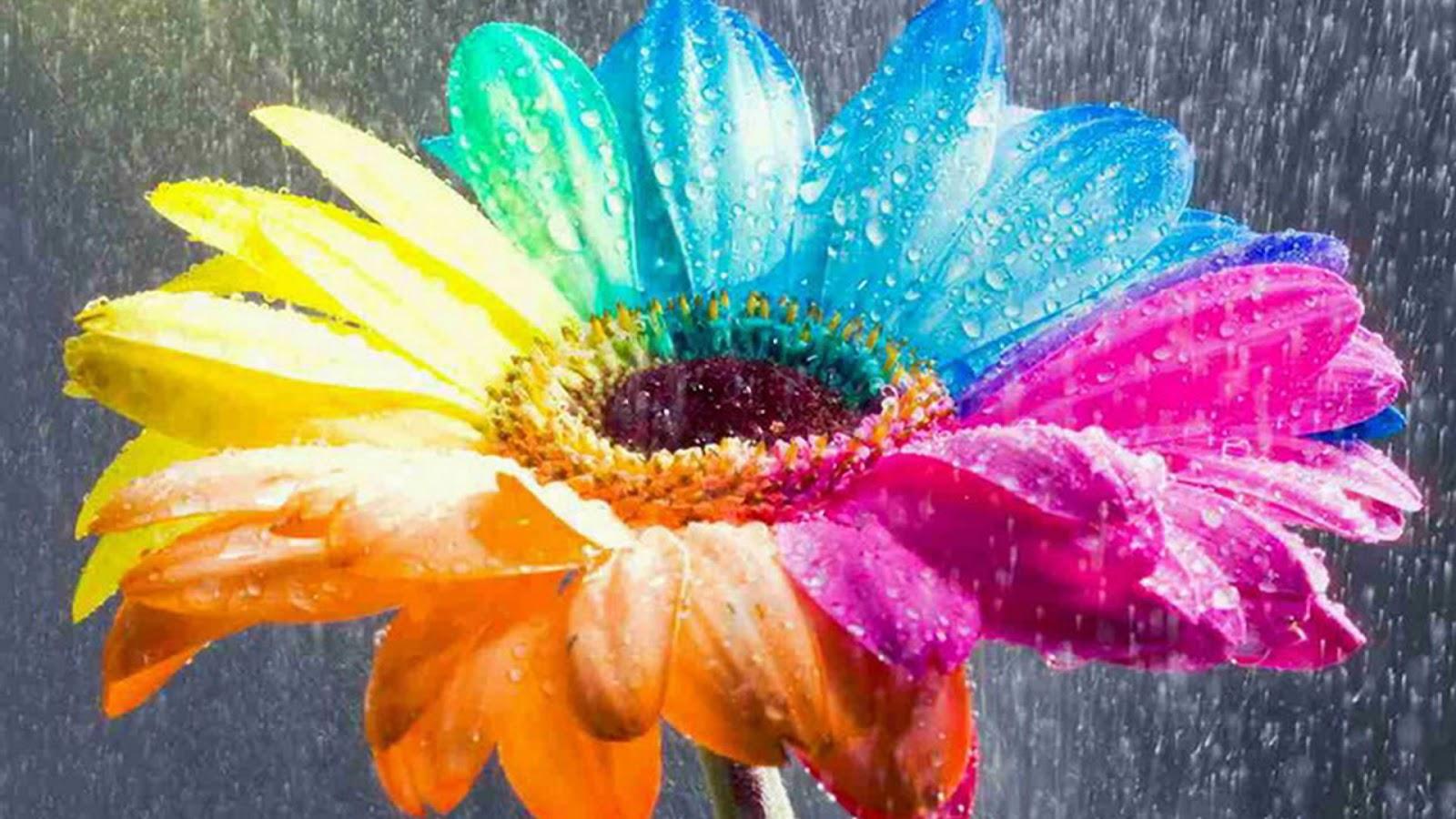 Garden Flower Wallpaper Blogging Tips Social Media TipsSEO Tips 1600x900