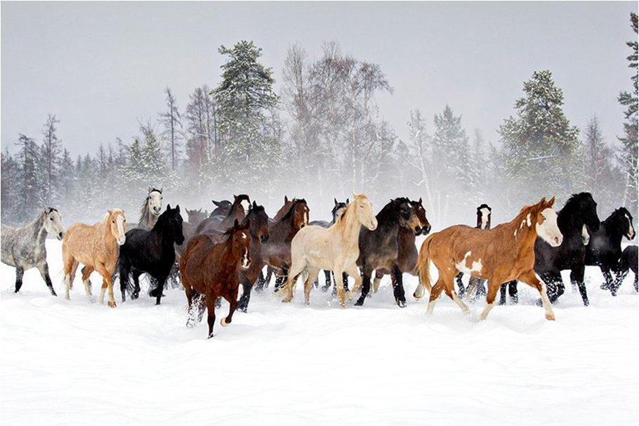 Horses at winter wallpaper   ForWallpapercom 910x606