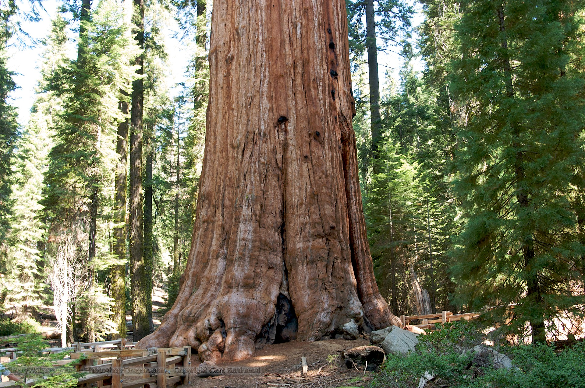 General Sherman Tree in Sequoia National Park wallpaper   Click 1920x1275