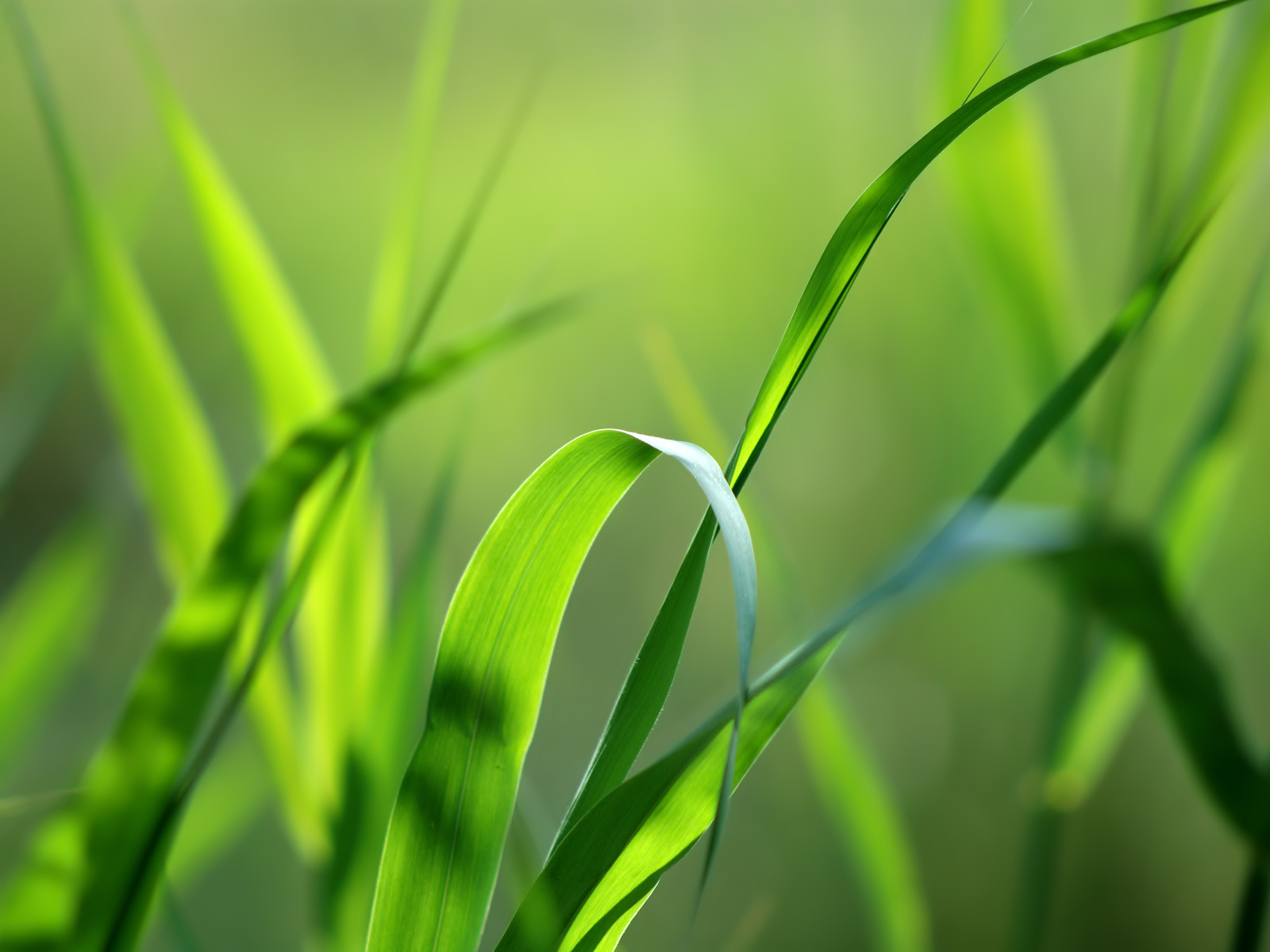 Green Wallpapers BestWallpaperZonecom 1600x1200