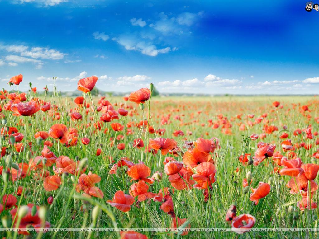Nature Flower Wallpaper - WallpaperSafari