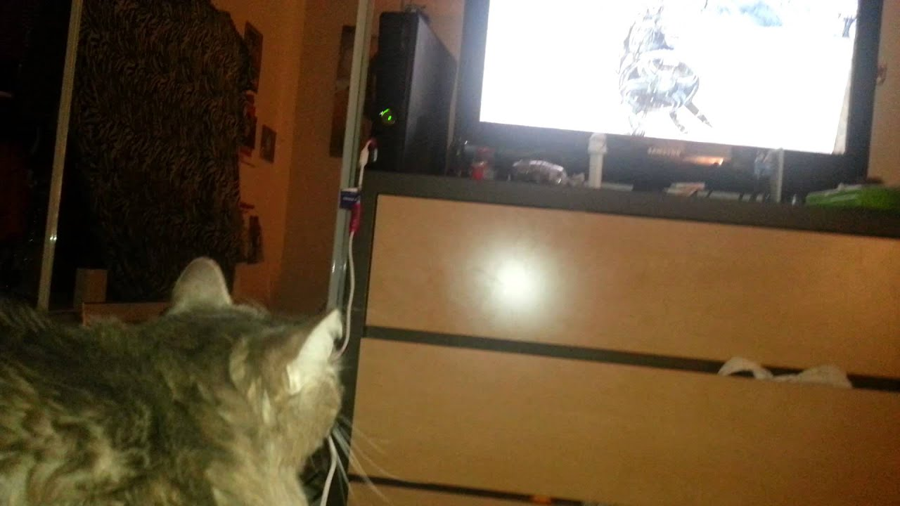 Kitty hisses at Khajit on Skyrim 1920x1080