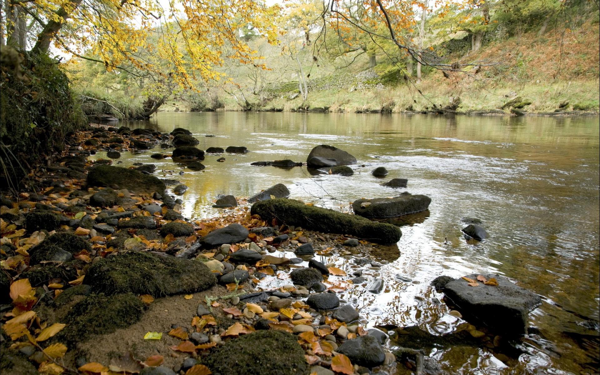 River Shore Tree Foliage Rocks wallpapers River Shore Tree Foliage 1920x1200