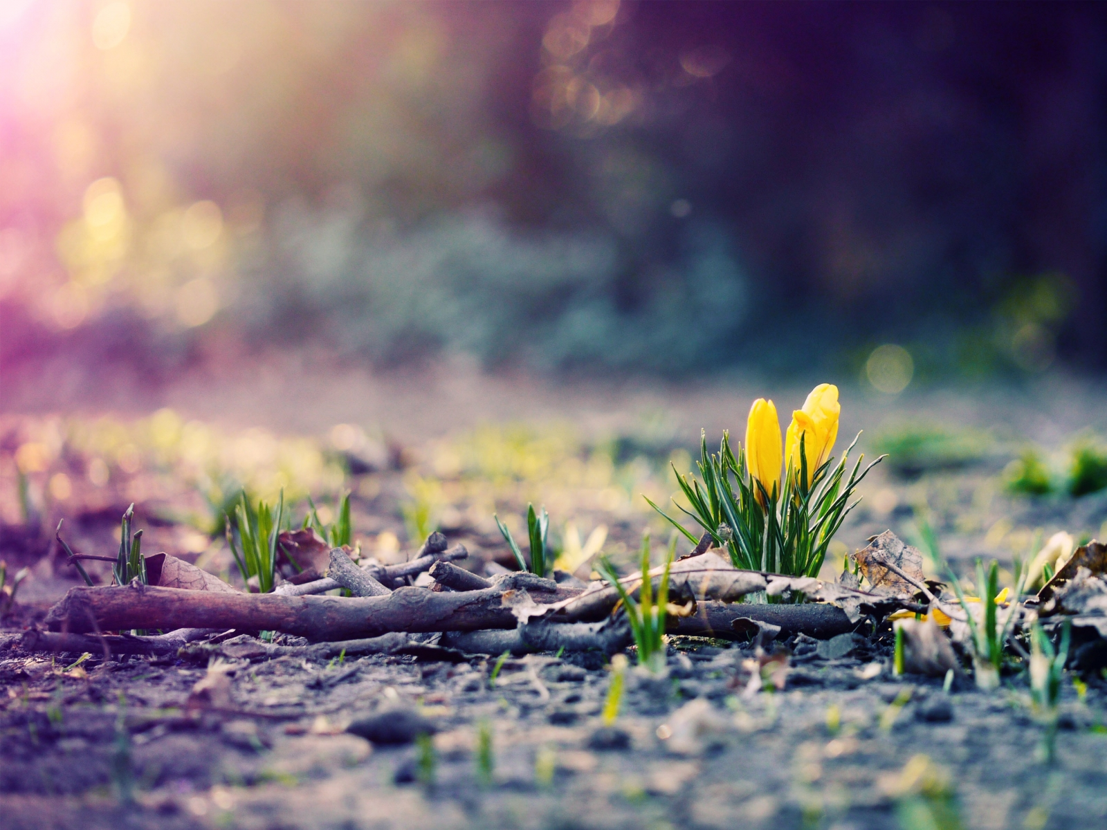 Spring Flowers Photo   Wallpaper High Definition High Quality 1600x1200