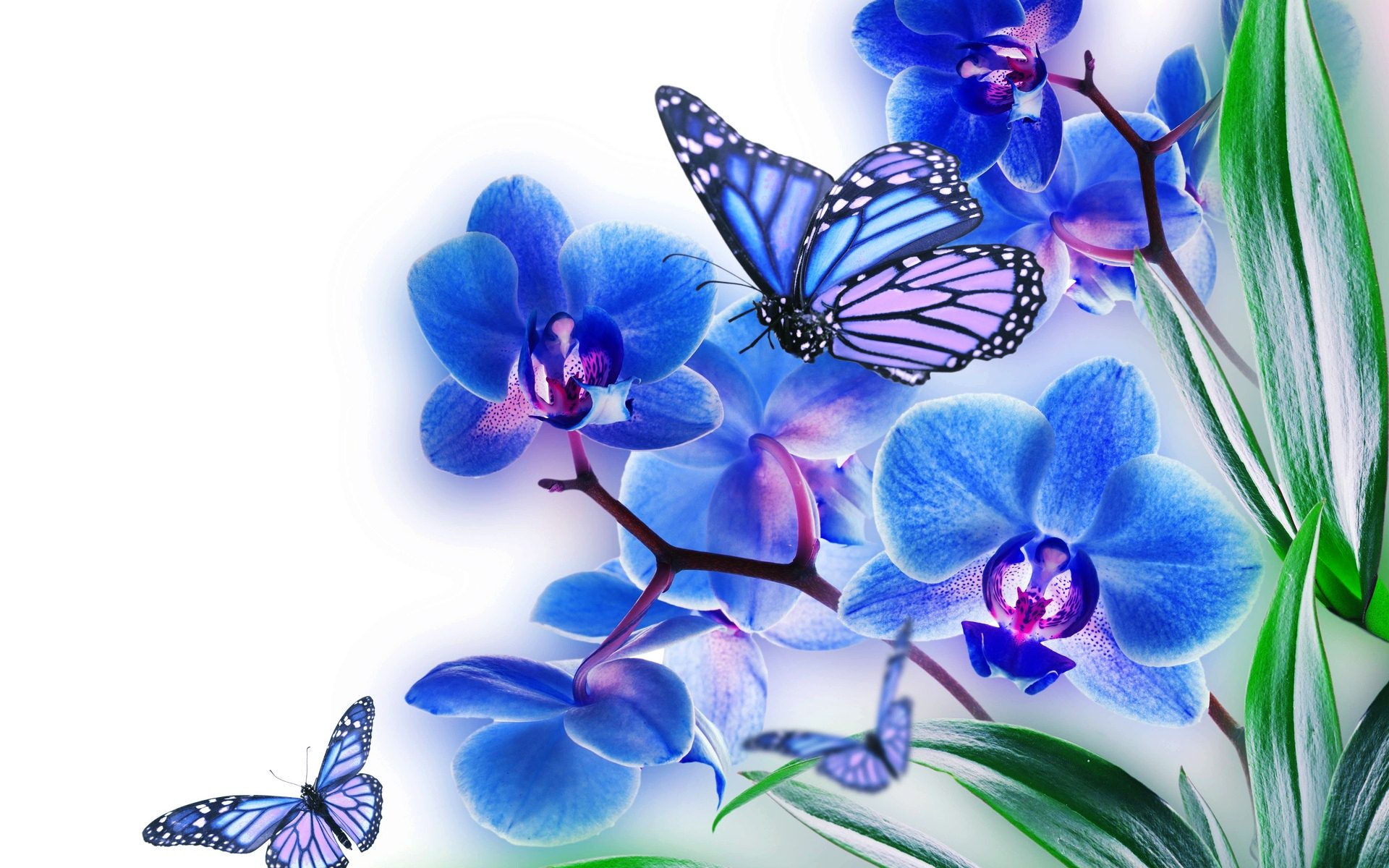 blue butterfly wallpaper - wallpapersafari