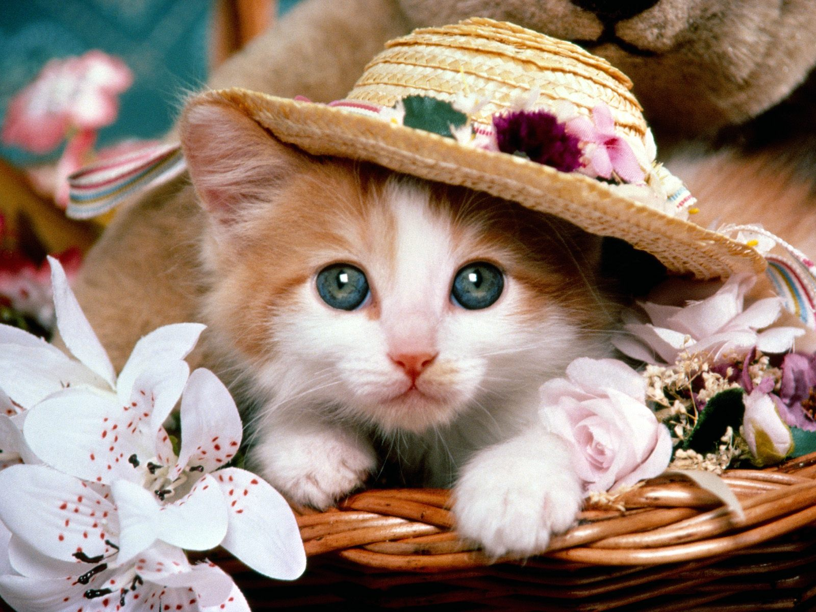 Top 10 Beautiful Cat Wallpapers 1600x1200