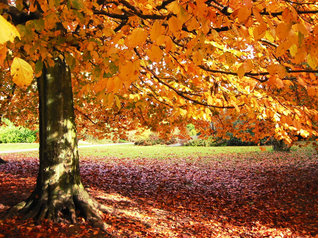 Autumn Wallpaper Pictures Images 1024x768