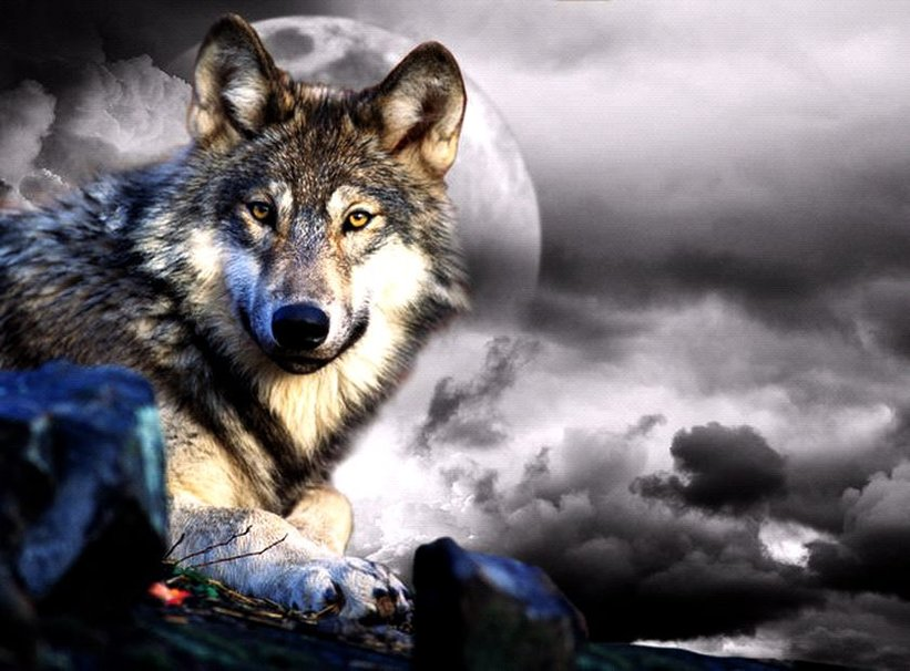 awesome wolf wallpapers wallpapersafari
