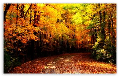 Download Wisconsin Autumn wallpaper 510x330
