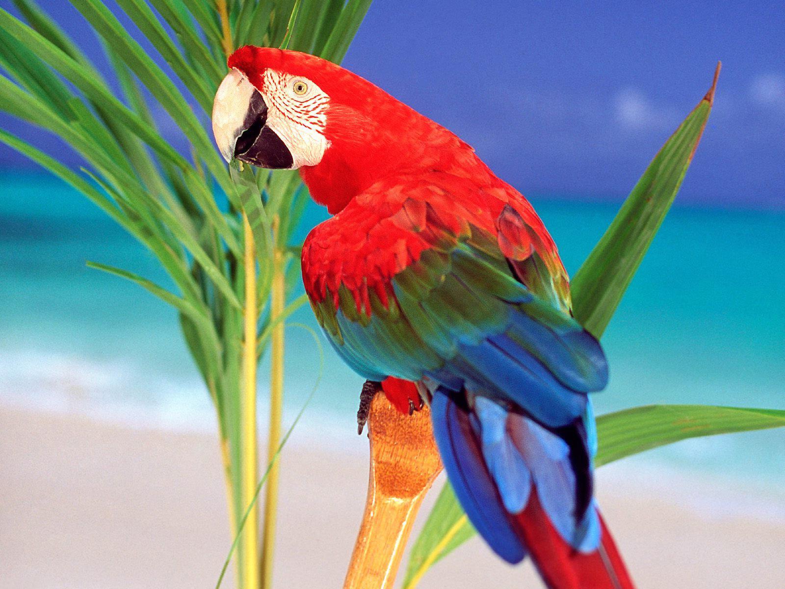 parrots birds pictures wallpaper desktop parrots birds wallpaper 1600x1200