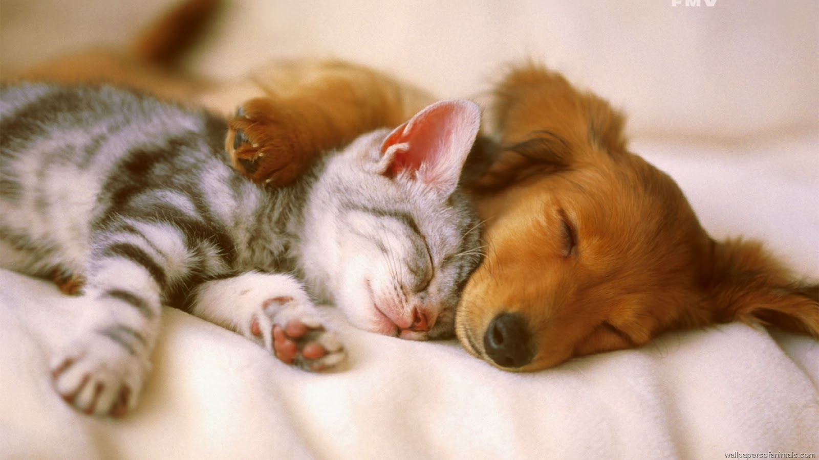 Cute Dog With Cat Desktop Background Wallpaper 1600x900