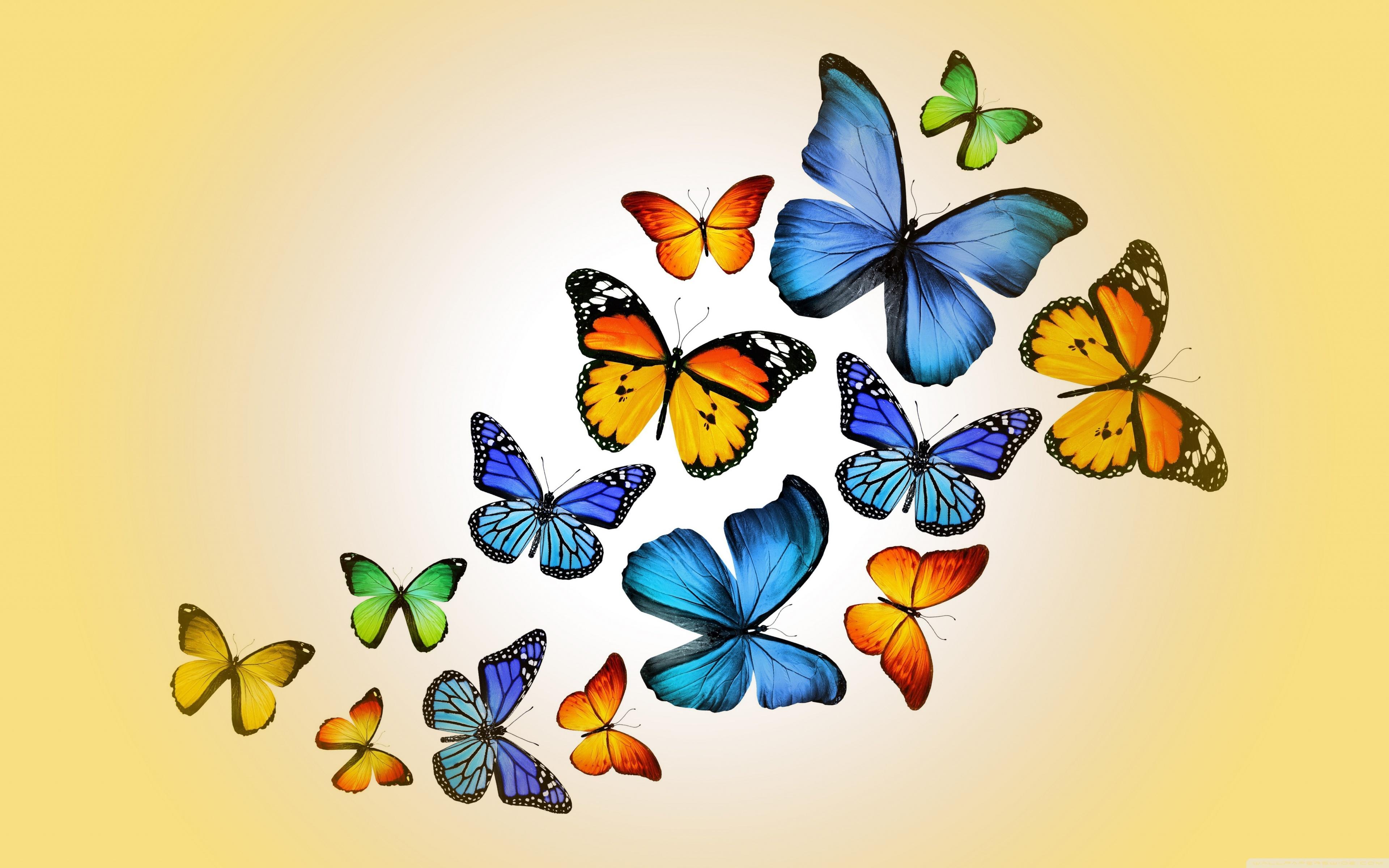 Butterflies 4K HD Desktop Wallpaper for 4K Ultra HD TV Wide 3840x2400