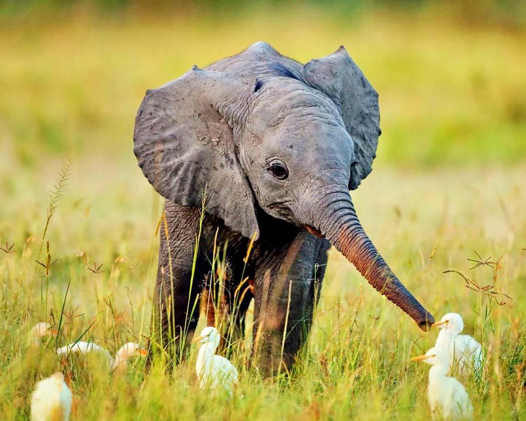 Baby Elephants Jodi L Milner Author 1024x819