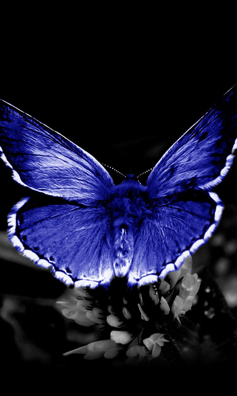 butterfly live wallpaper wallpapersafari