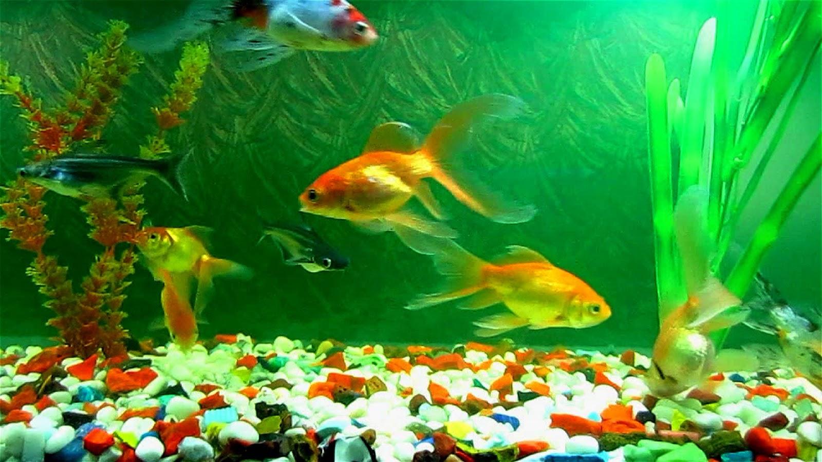 Fish aquarium screensaver - Fish Aquarium A Good Remedial Measure For Vastu Defect