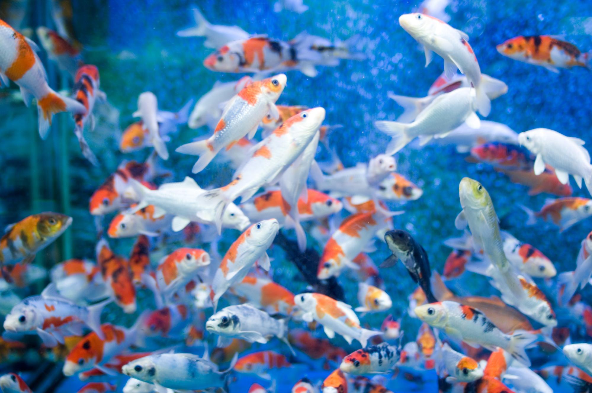 Desktop Wallpaper Animated Aquarium Greenmamahk Store Magecloud Net