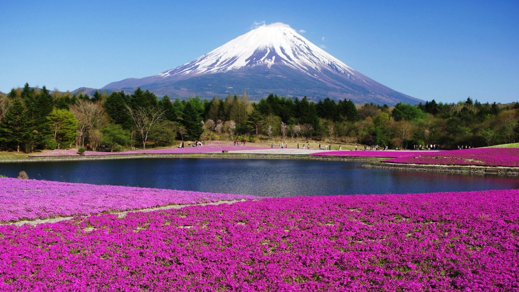 Japan Mount Fuji 2019 HD Desktop Wallpapers YL Computing 1800x1013