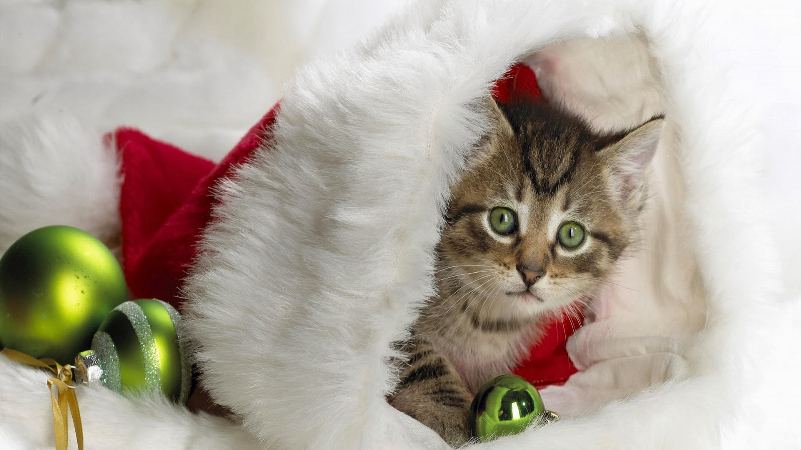Christmas gift wallpapers and make this Cat Christmas gift wallpapers 1600x900