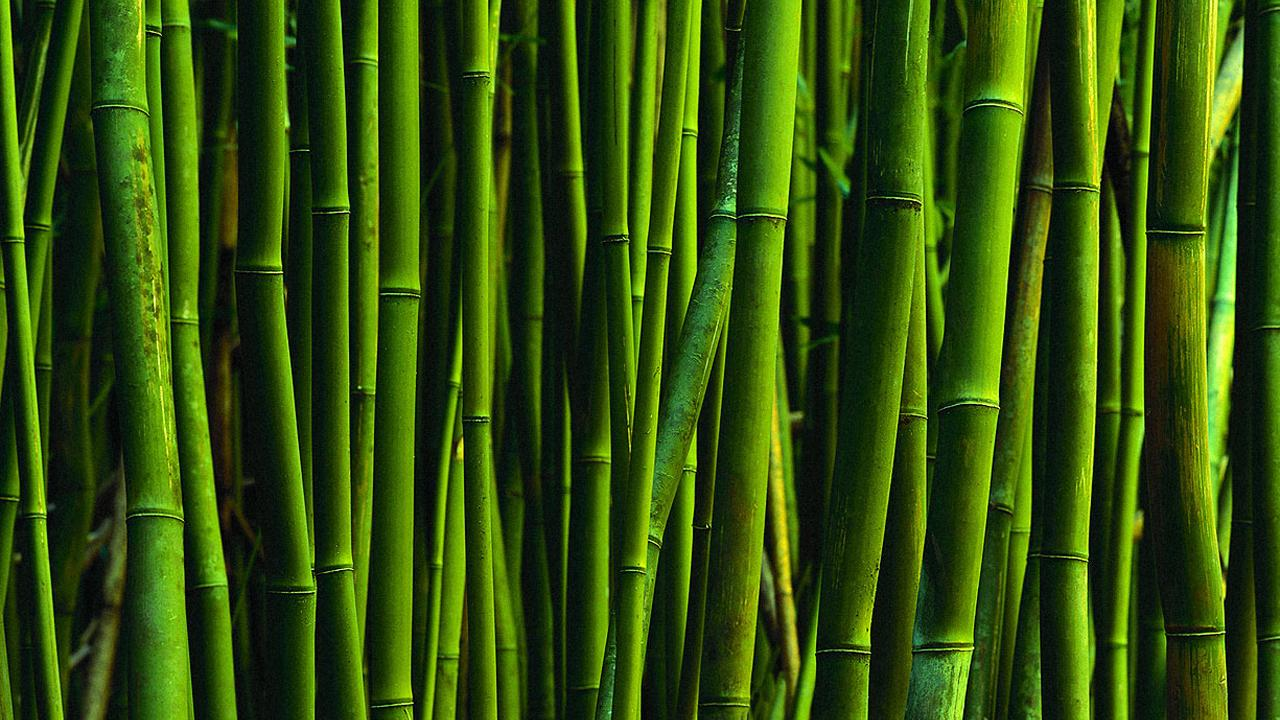 Bamboo wallpaper wall coverings wallpapersafari for Bamboo wallpaper for walls