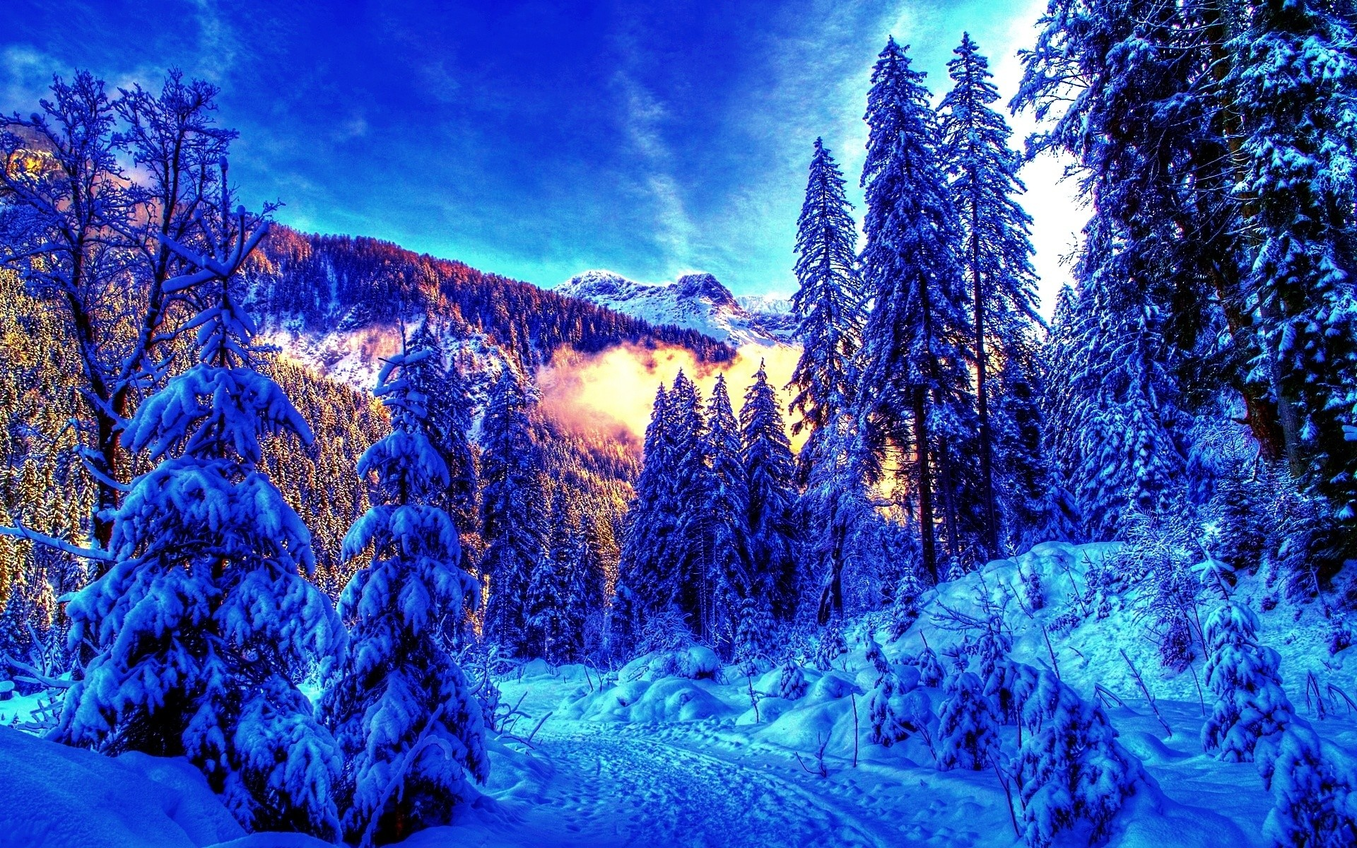 Snow Trees Wallpaper 1920x1200 Snow Trees Winter Landscapes HDR 1920x1200