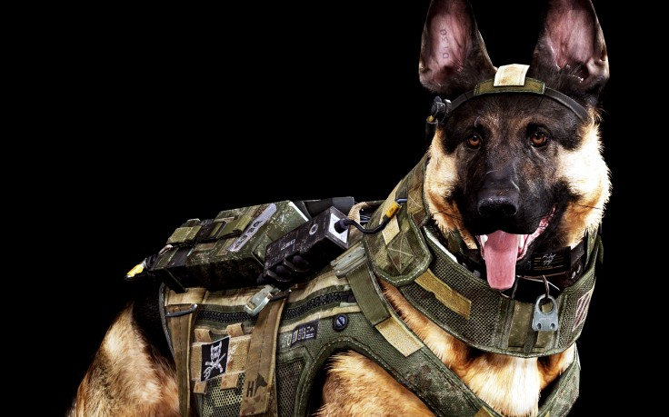 Dog Army Awesome HD Wallpaper Desktop Background 736x459