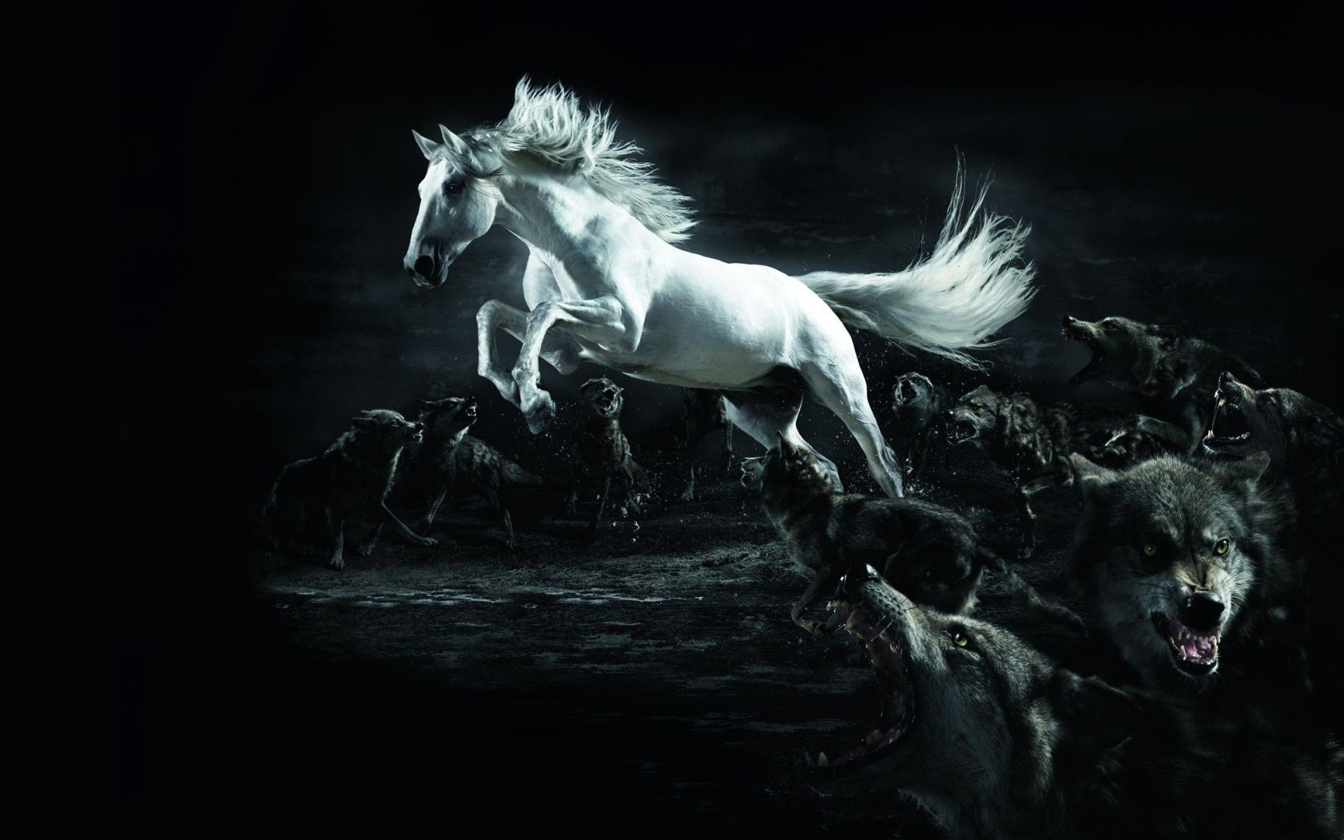 Free Download Running Horses Wallpaper 63 Images 1920x1200 For
