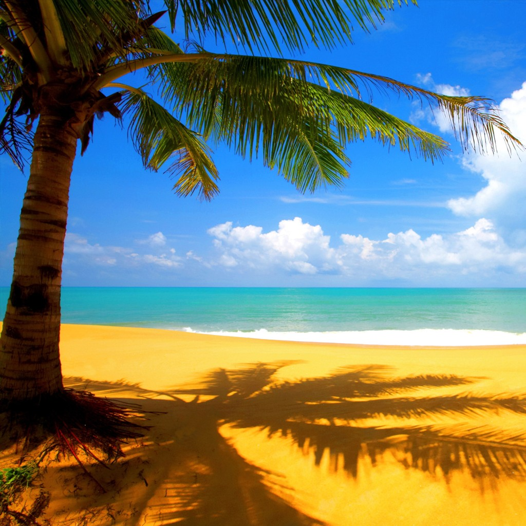 62 Tropical Background Images On Wallpapersafari