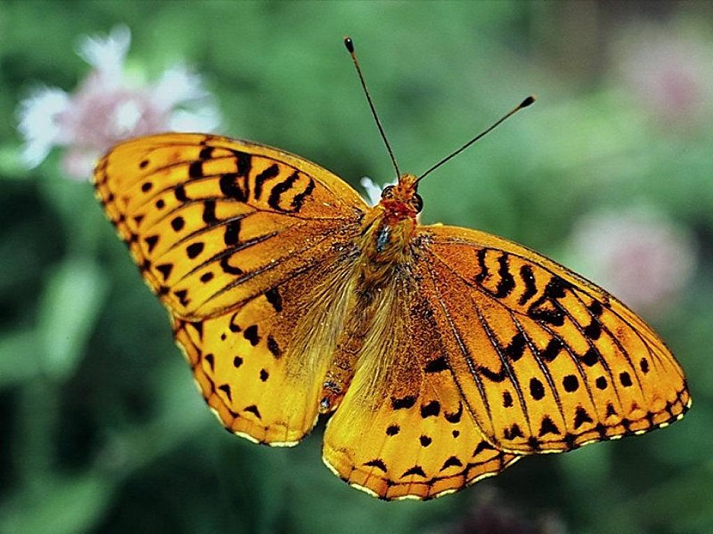 Wallpaper Green Butterfly Wallpaper World 1024x768