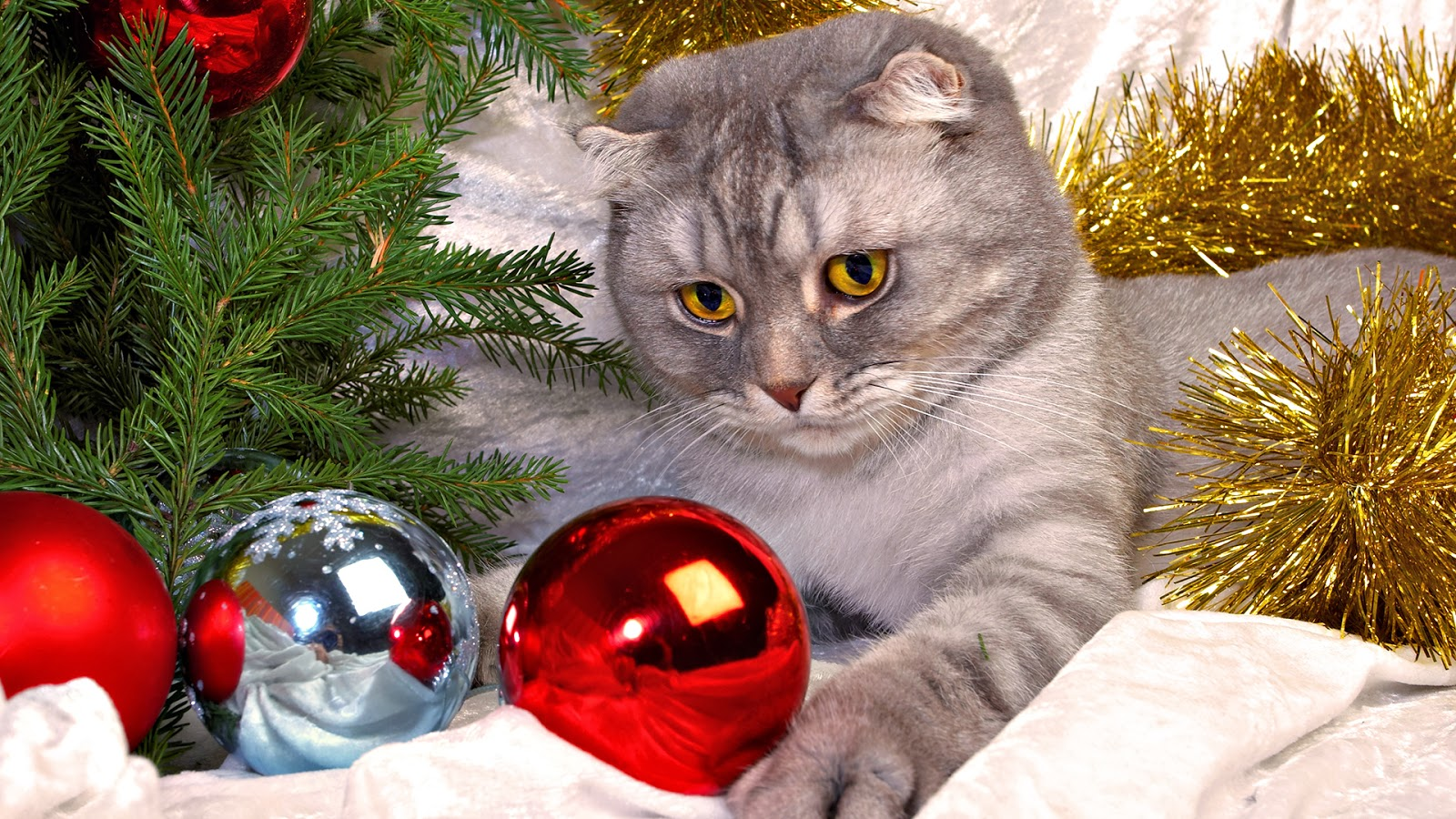 Cute Cats Christmas HD Wallpapers   HD Wallpapers Blog 1600x900